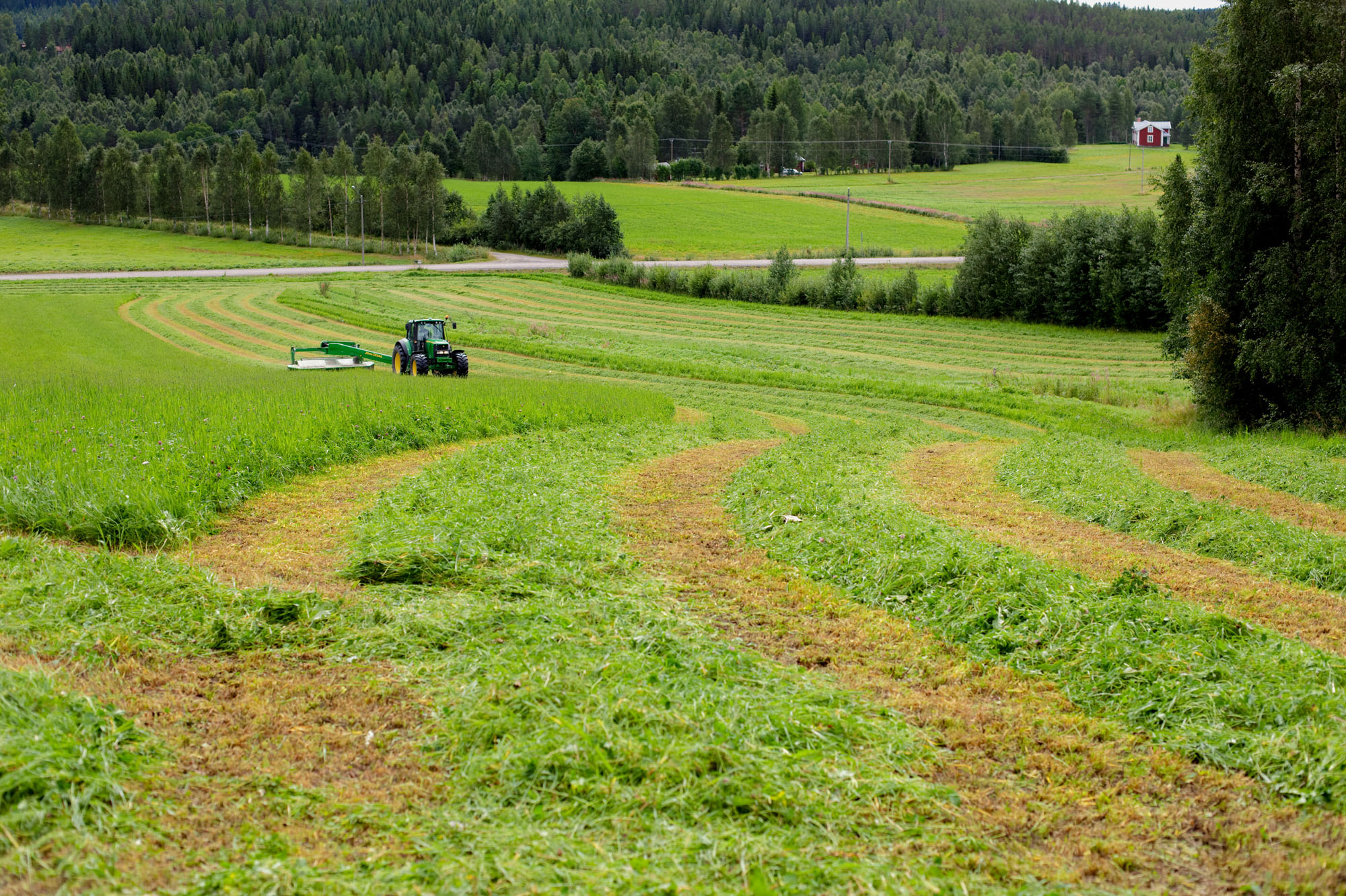 Haymaking. - Photo: Patrick Degerman, www.degerman.se