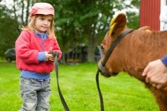 The calves have fun with kids. - Photo: Patrick Degerman, www.degerman.se