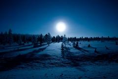 Skog i månsken